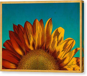 Canvas Print featuring the drawing Sunflower by Meg Shearer
