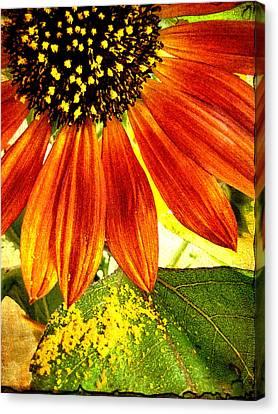 Sunflower Memories Canvas Print by Kathy Bassett