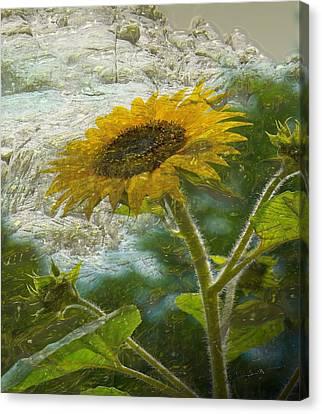 Sunflower Mountain Canvas Print