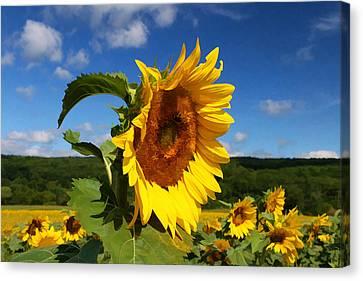 Sunflower Nirvana 22 Canvas Print by Allen Beatty