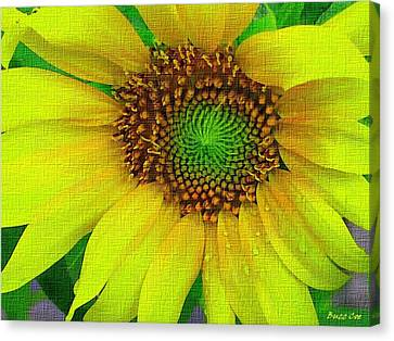 Sunflower On Strong Canvas Canvas Print by Buzz  Coe