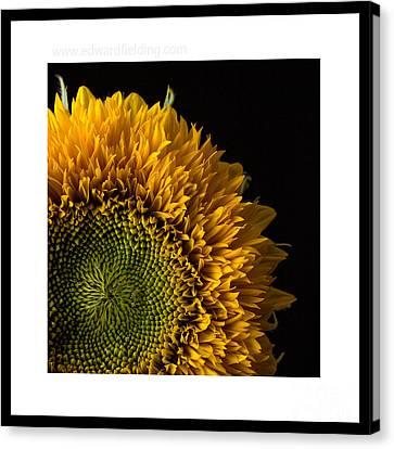 Sunflower Original Signed Mini Canvas Print
