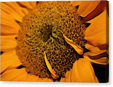 Canvas Print featuring the photograph Sunflower Painting by Ellen Tully