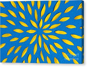 Sunflower Petals Pattern Canvas Print by Tim Gainey