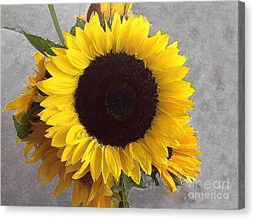 Sunflower Photo With Dry Brush Filter Canvas Print