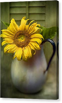 Sunflower Series I Canvas Print by Kathy Jennings