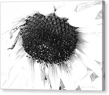 Sunflower - Simply Sweet Canvas Print by Janine Riley