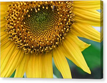 Sunflower Smiles Canvas Print by Julie Andel