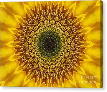 Sunflower Sunburst Canvas Print by Annette Allman