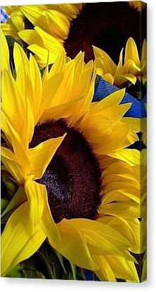 Canvas Print featuring the photograph Sunflower Sunny Yellow In New Orleans Louisiana by Michael Hoard