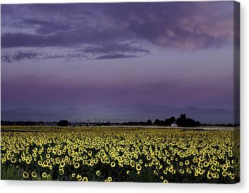 Canvas Print featuring the photograph Sunflower Sunrise by Kristal Kraft