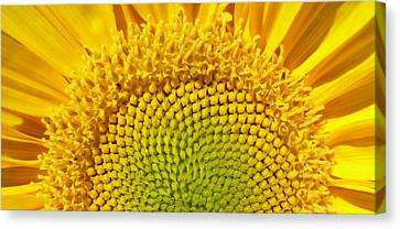 Canvas Print featuring the photograph Sunflower Sunrise by Michael Dohnalek