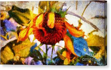 Sunflower Tender Canvas Print by Janine Riley