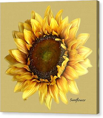 Canvas Print featuring the digital art Sunflower by Tom Romeo