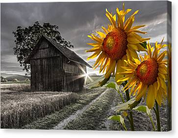 Sunflower Watch Canvas Print by Debra and Dave Vanderlaan