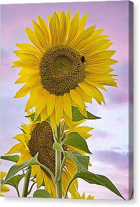 Sunflower With Colorful Evening Sky Canvas Print