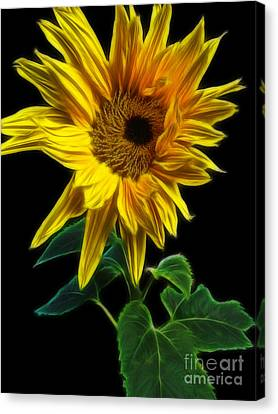 Sunflower Canvas Print by Yvonne Johnstone