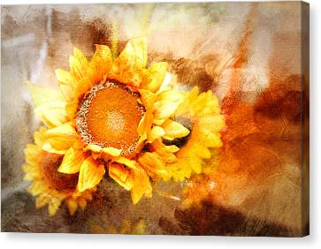 Sunflowers Aglow Canvas Print by Mary Timman