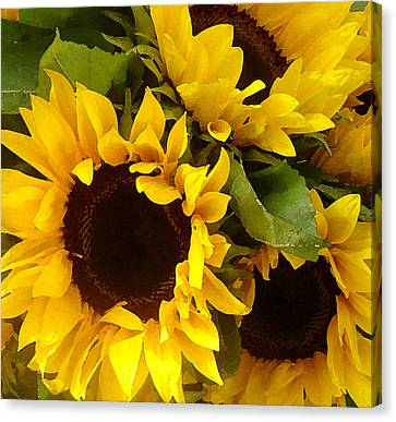Digital Sunflower Canvas Print - Sunflowers by Amy Vangsgard