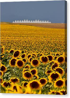 Canvas Print featuring the photograph Sunflowers And Airports by Ronda Kimbrow
