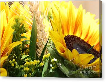 Sunflowers And Wheat Canvas Print by Julie Alison