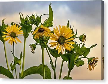 Barbara Smith Canvas Print - Sunflowers by Barbara Smith
