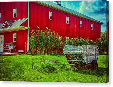 Sunflowers Beside A Big Red Barn Canvas Print