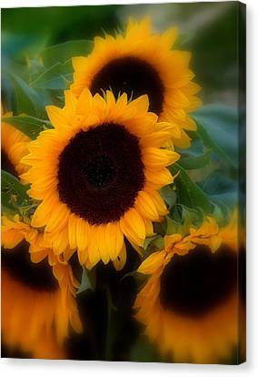 Canvas Print featuring the photograph Sunflowers by Caroline Stella