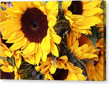 Canvas Print featuring the photograph Sunflowers by Dora Sofia Caputo Photographic Art and Design