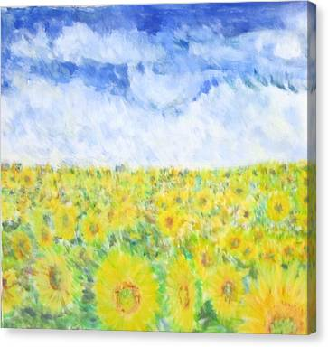 Sunflowers In A Field In  Texas Canvas Print