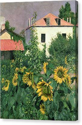 Sunflowers In The Garden At Petit Gennevilliers  Canvas Print by Gustave Caillebotte
