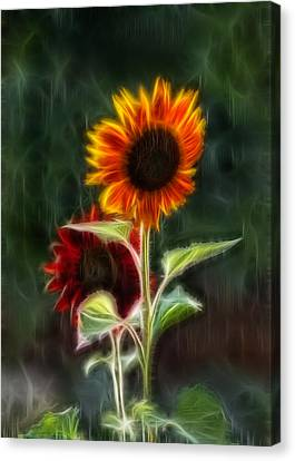 Sunflowers In The Rain Canvas Print by Omaste Witkowski