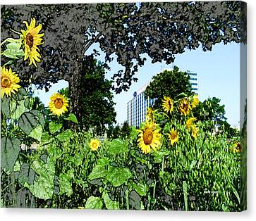 Sunflowers Outside Ford Motor Company Headquarters In Dearborn Michigan Canvas Print by Design Turnpike