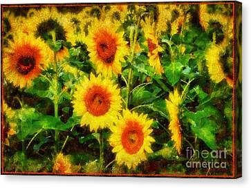 Sunflowers Parade In A Field Canvas Print by Janine Riley