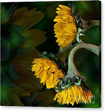 Canvas Print featuring the photograph Sunflowers by Shirley Mangini