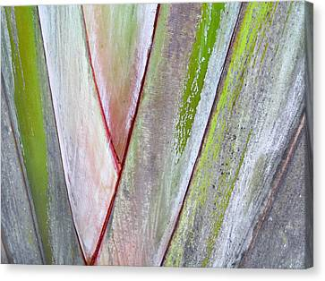 Sunken Gardens Abstract 4 Canvas Print by Maria Huntley