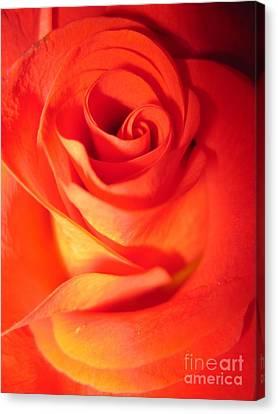 Sunkissed Orange Rose 10 Canvas Print by Tara  Shalton