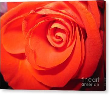 Sunkissed Orange Rose 9 Canvas Print by Tara  Shalton