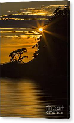 Sunkissed Canvas Print by Sonya Lang