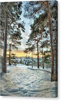 Sunkissed Trees Canvas Print