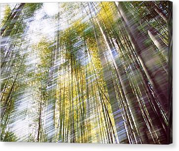 Sunlight In Bamboo Forest Canvas Print by Panoramic Images