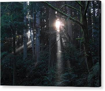 Sunlight In The Forest Canvas Print