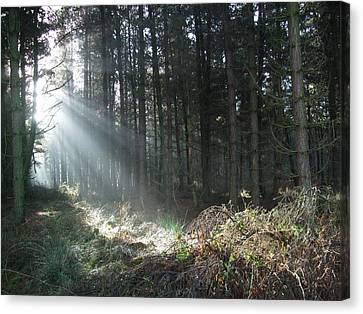 Canvas Print featuring the photograph Sunlight On Cannock Chase by Jean Walker