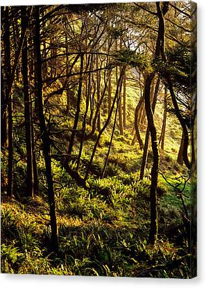 Sunlight On Fern Plants Growing In Canvas Print by Panoramic Images
