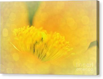Sunlight On Poppy Abstract Canvas Print by Kaye Menner