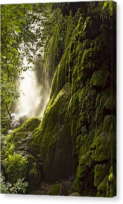 Gorman Falls Ray Of Light Canvas Print
