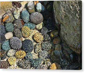 Sunlight On Wet Rocks Canvas Print by Wendy J St Christopher