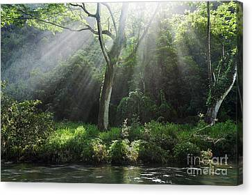 Sunlight Rays Through Trees Canvas Print by M Swiet Productions