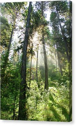 Sunlight Shining Through Forest Canopy Canvas Print by Eric Zamora
