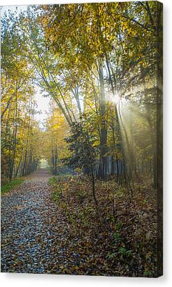 Sunlight Streaming Through The Trees Canvas Print by Jacques Laurent